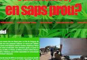 cannabis_en_saps_prou_200